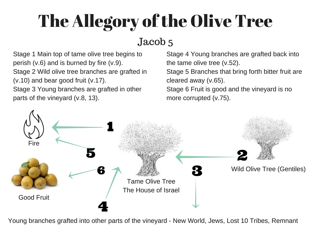Jacob 5 the allegory of the olive tree part 2 lds scripture in jacob 53 zenos explains to his hearers that the tame olive tree represents the buycottarizona Choice Image